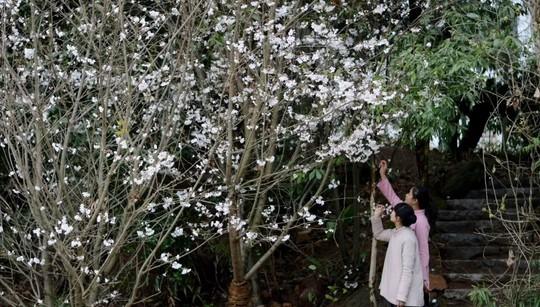 武夷山游学 | 以茶会友,体验美宿,来一场古香古色的生活美学之旅