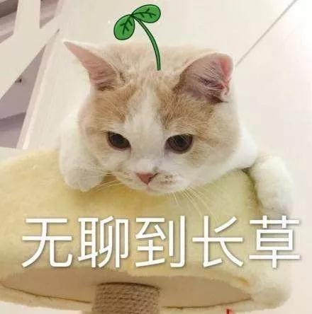 WeChat 圖片_20191023091820.jpg